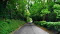 I just love the narrow roads and sculptured trees.