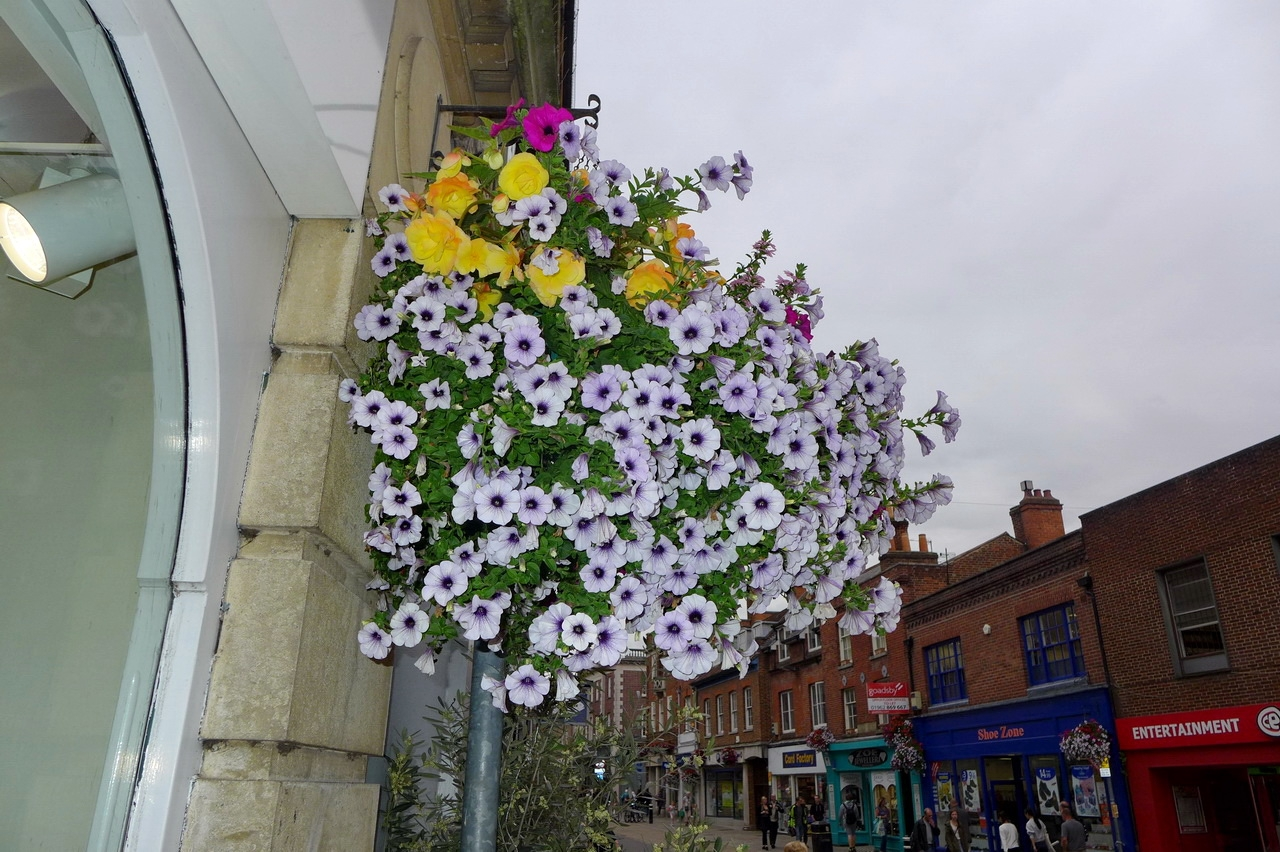 Hanging baskets, Winchester UK